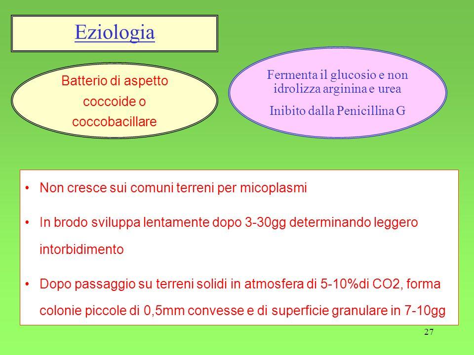Eziologia Fermenta il glucosio e non idrolizza arginina e urea