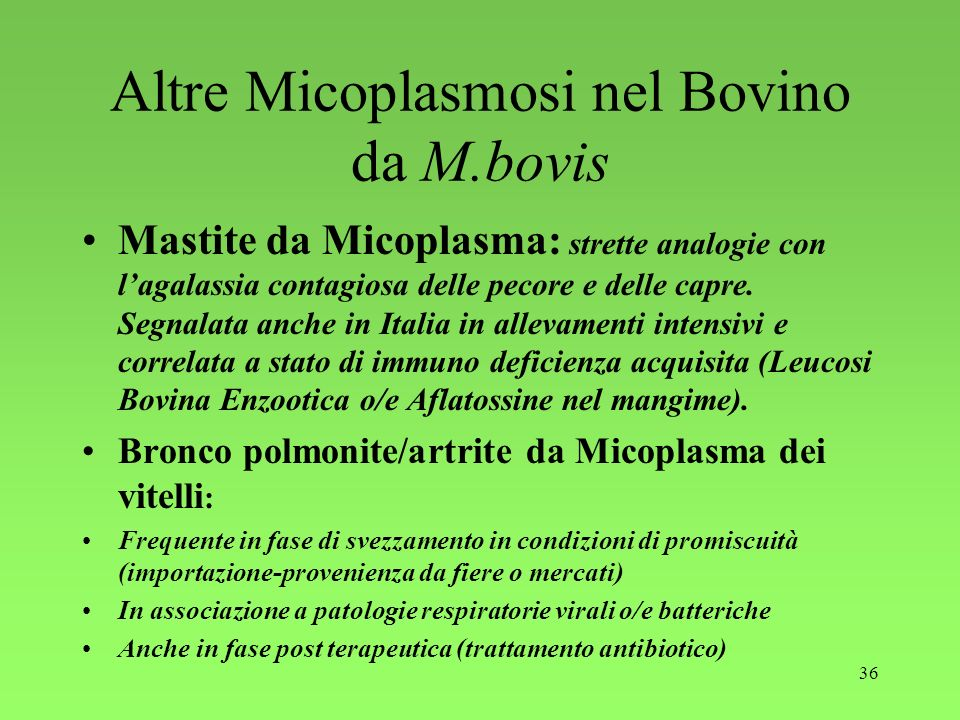 Altre Micoplasmosi nel Bovino da M.bovis