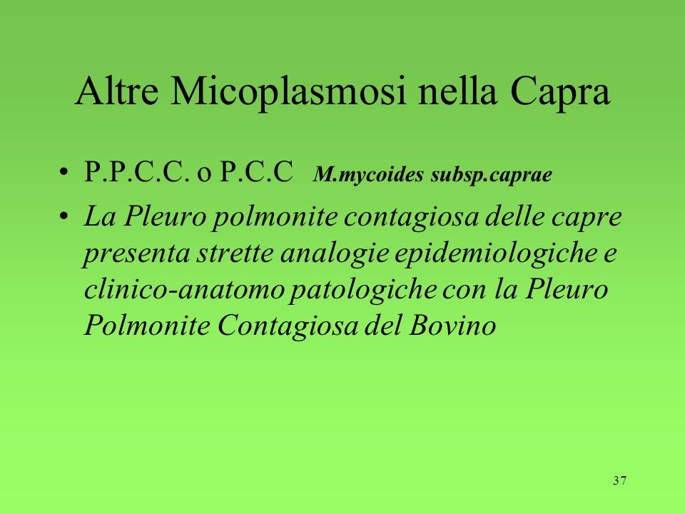 Altre Micoplasmosi nella Capra