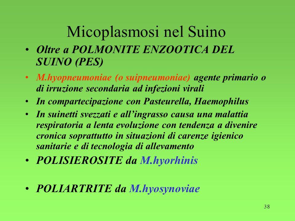 Micoplasmosi nel Suino