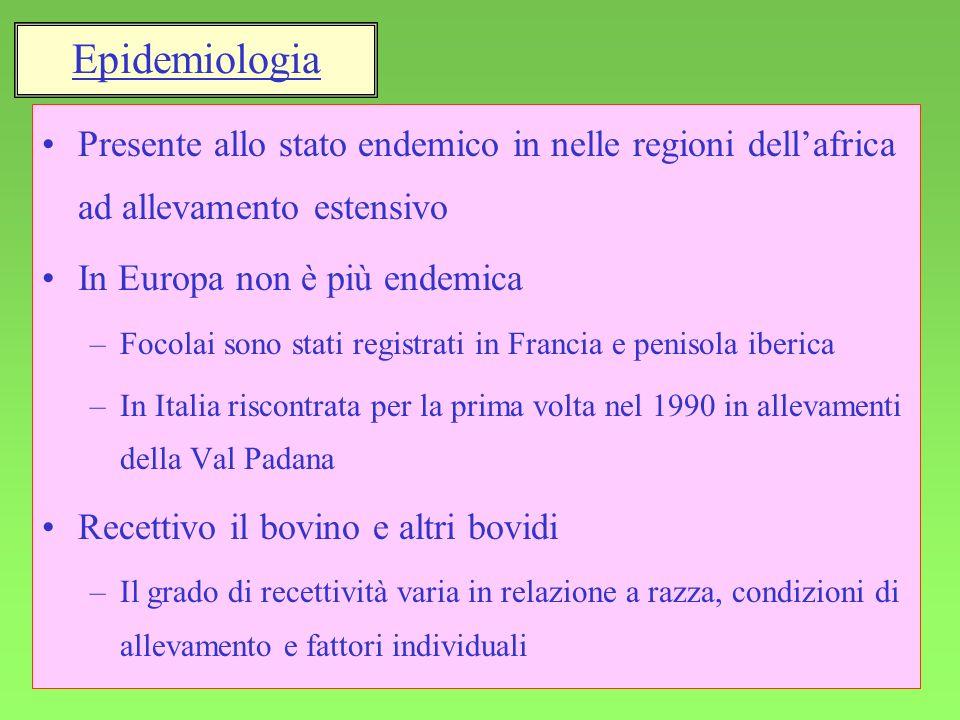 Epidemiologia Presente allo stato endemico in nelle regioni dell'africa ad allevamento estensivo. In Europa non è più endemica.