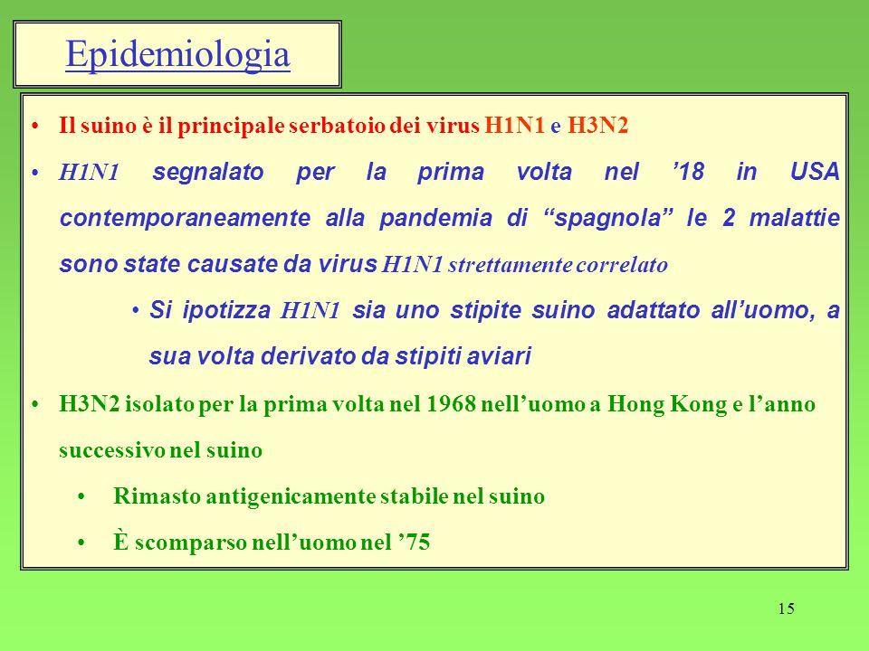 Epidemiologia Il suino è il principale serbatoio dei virus H1N1 e H3N2