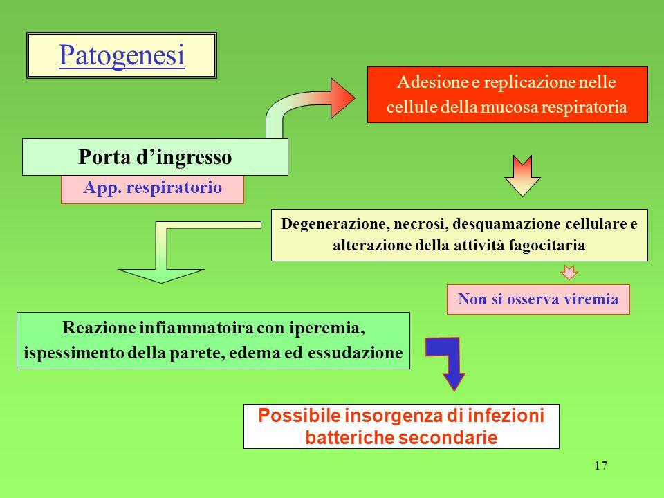 Possibile insorgenza di infezioni batteriche secondarie