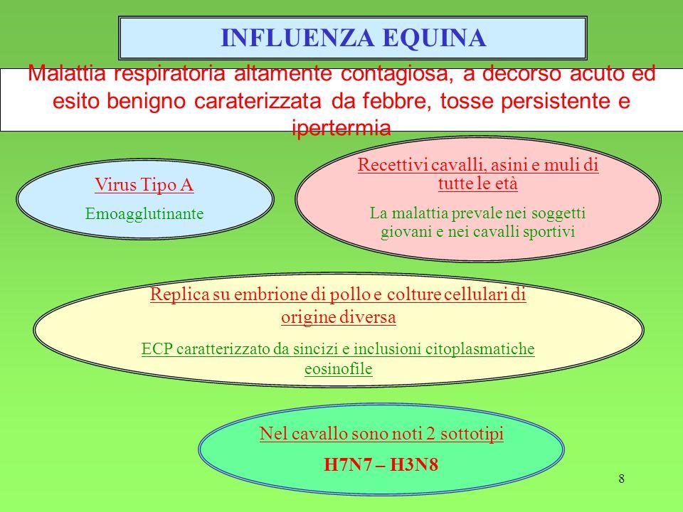 INFLUENZA EQUINA Malattia respiratoria altamente contagiosa, a decorso acuto ed esito benigno caraterizzata da febbre, tosse persistente e ipertermia.
