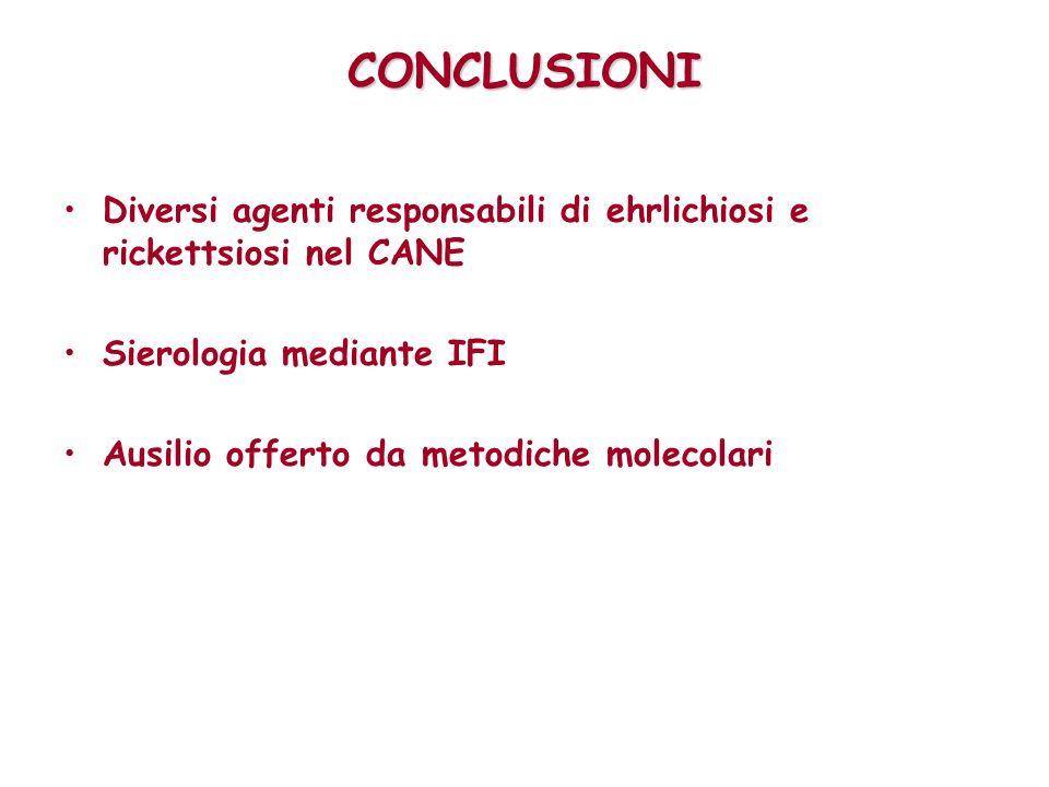 CONCLUSIONI Diversi agenti responsabili di ehrlichiosi e rickettsiosi nel CANE. Sierologia mediante IFI.