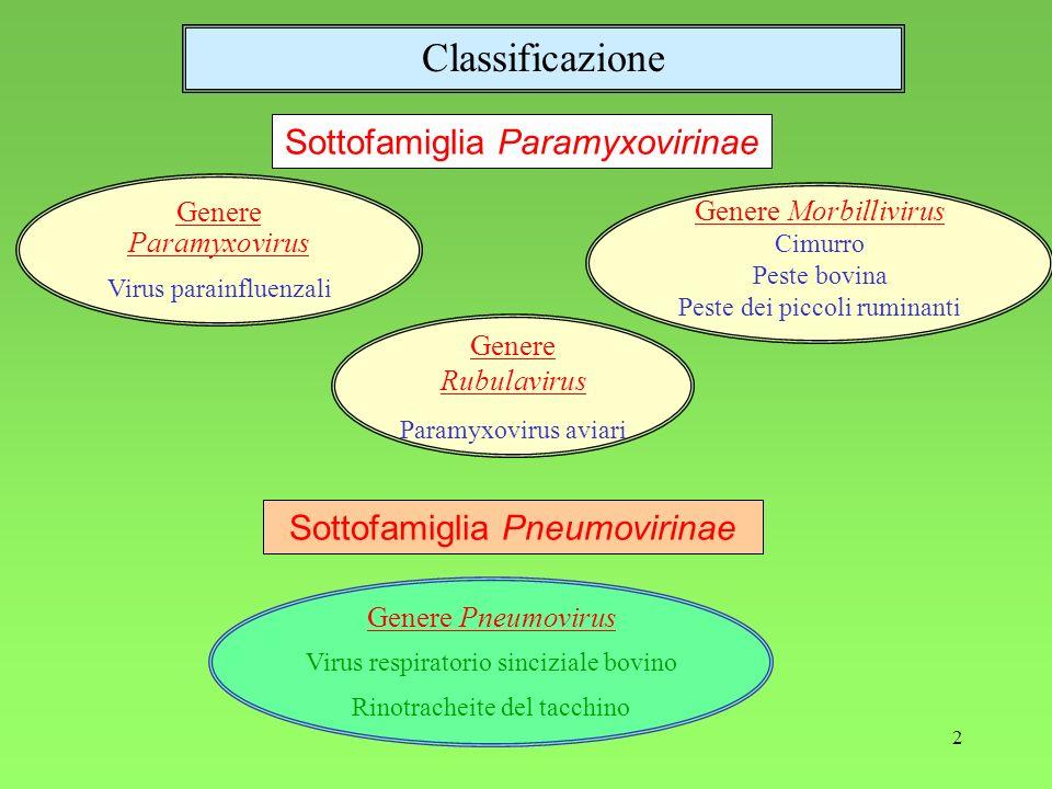 Classificazione Sottofamiglia Paramyxovirinae