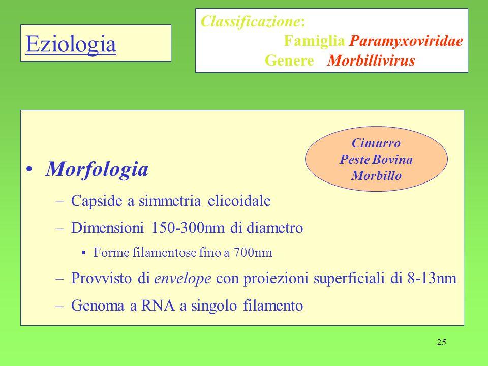 Eziologia Morfologia Classificazione: Famiglia Paramyxoviridae