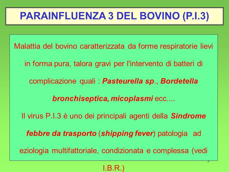 PARAINFLUENZA 3 DEL BOVINO (P.I.3)