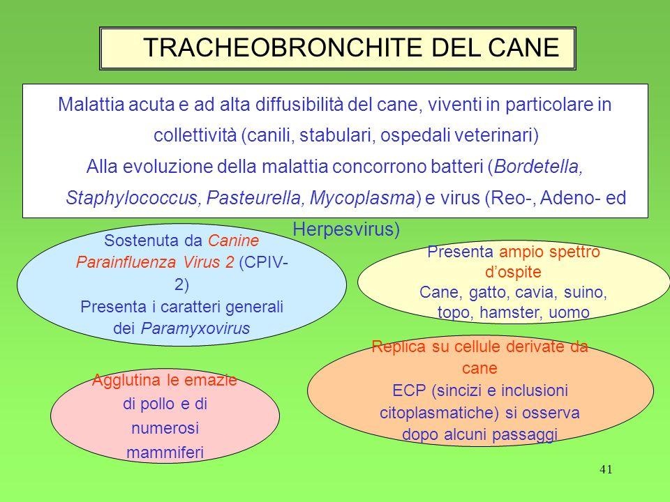 TRACHEOBRONCHITE DEL CANE