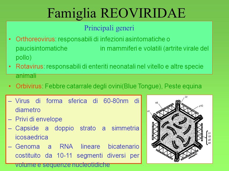 Famiglia REOVIRIDAE Principali generi Generalità