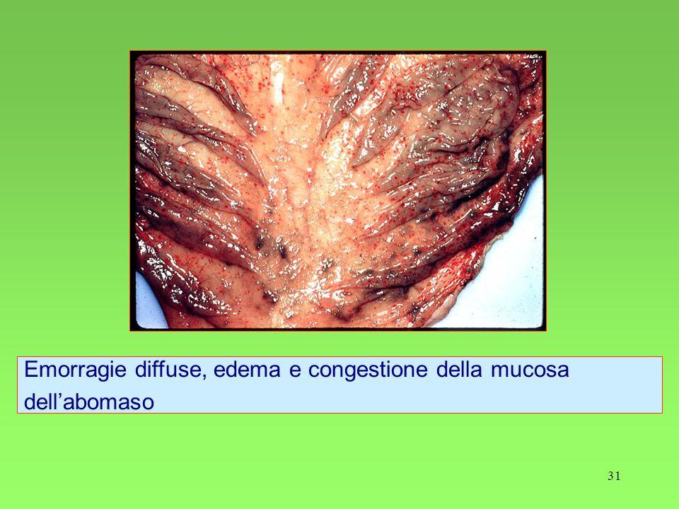 Emorragie diffuse, edema e congestione della mucosa dell'abomaso