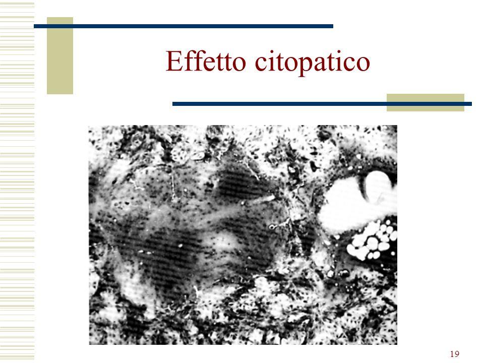 Effetto citopatico