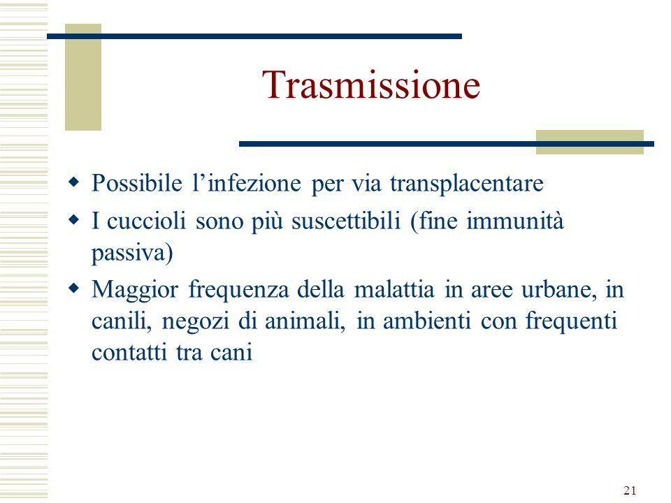 Trasmissione Possibile l'infezione per via transplacentare