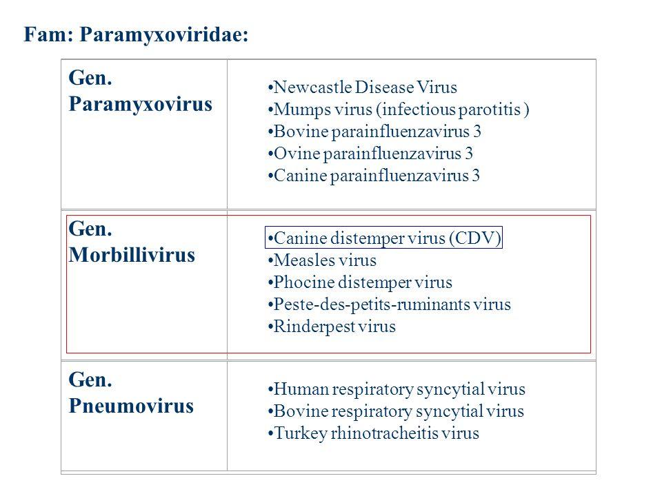 Fam: Paramyxoviridae:
