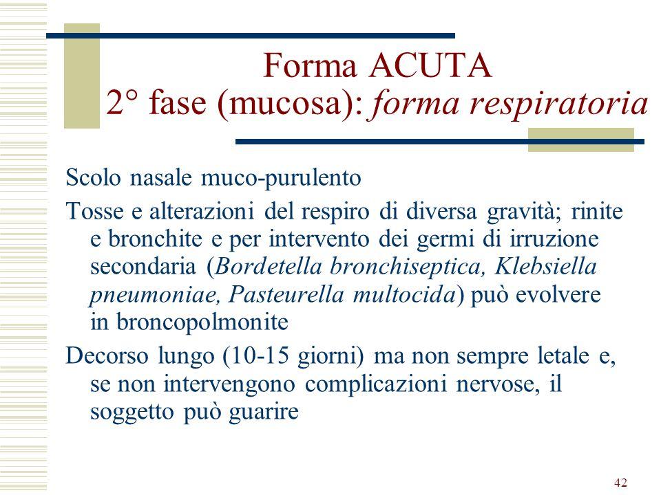 Forma ACUTA 2° fase (mucosa): forma respiratoria