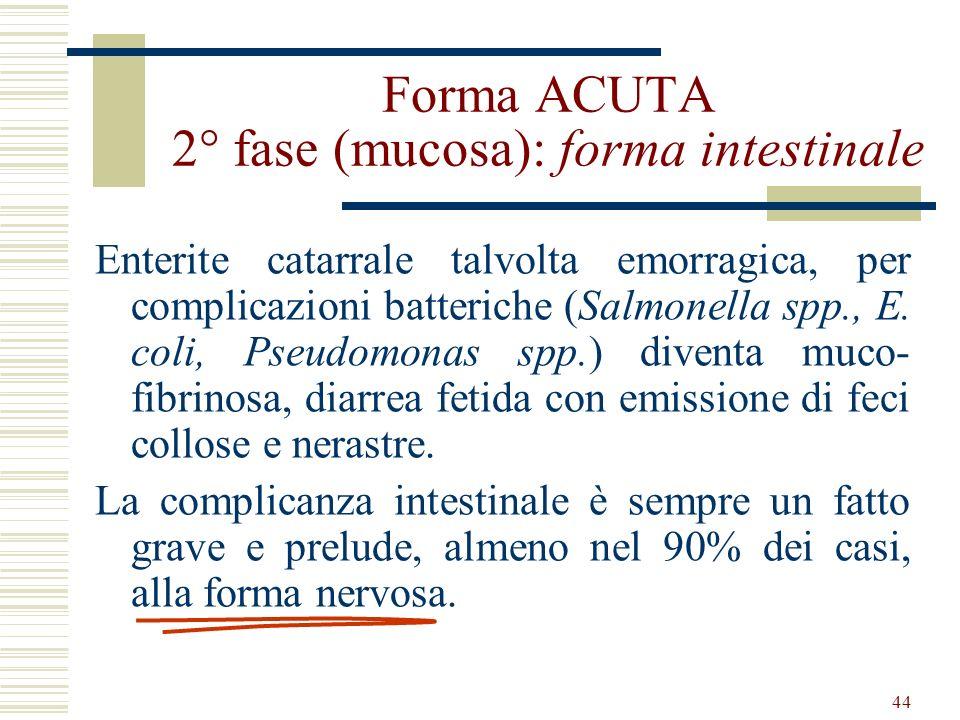 Forma ACUTA 2° fase (mucosa): forma intestinale
