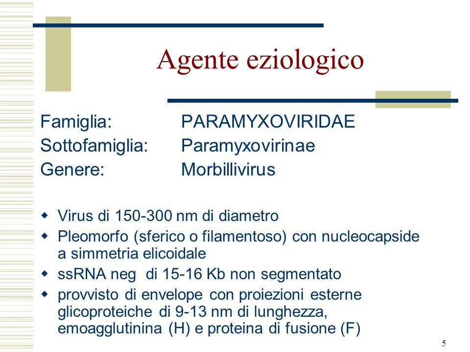 Agente eziologico Famiglia: PARAMYXOVIRIDAE