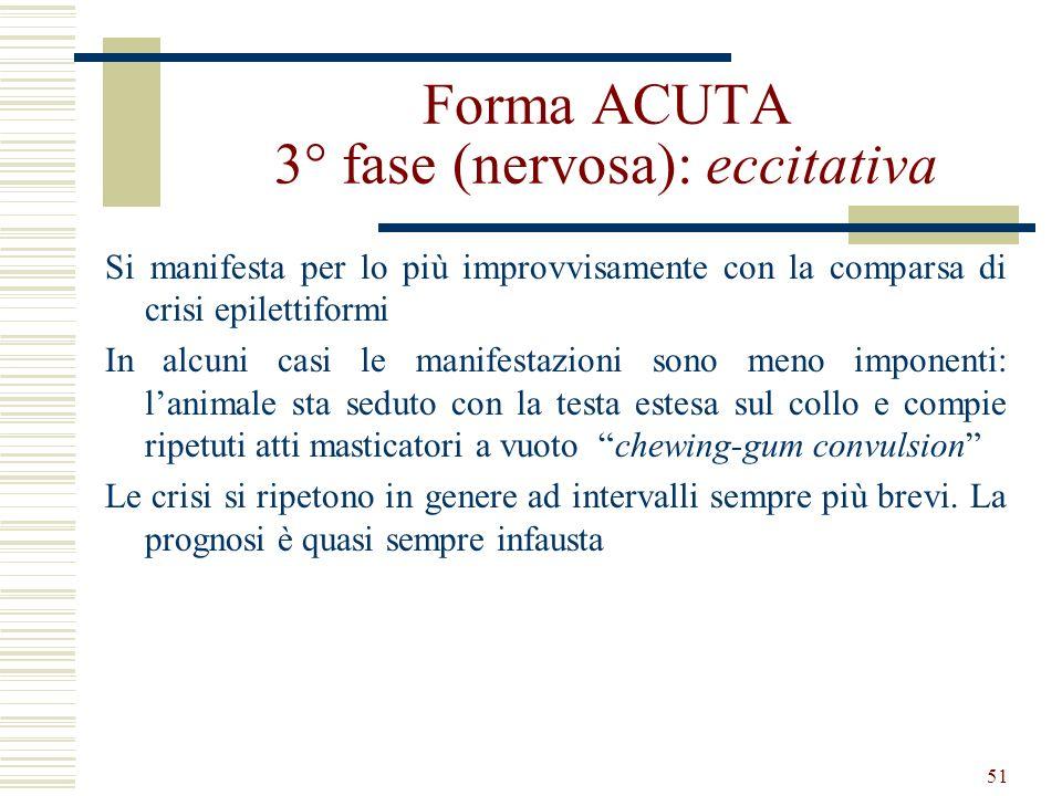 Forma ACUTA 3° fase (nervosa): eccitativa