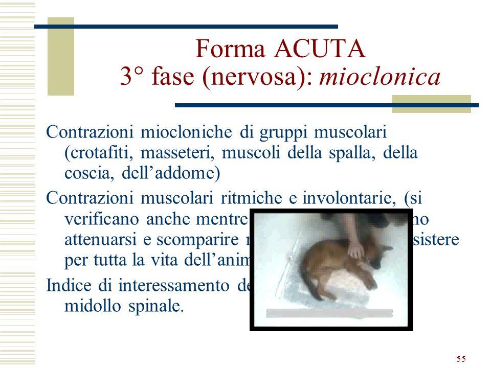 Forma ACUTA 3° fase (nervosa): mioclonica
