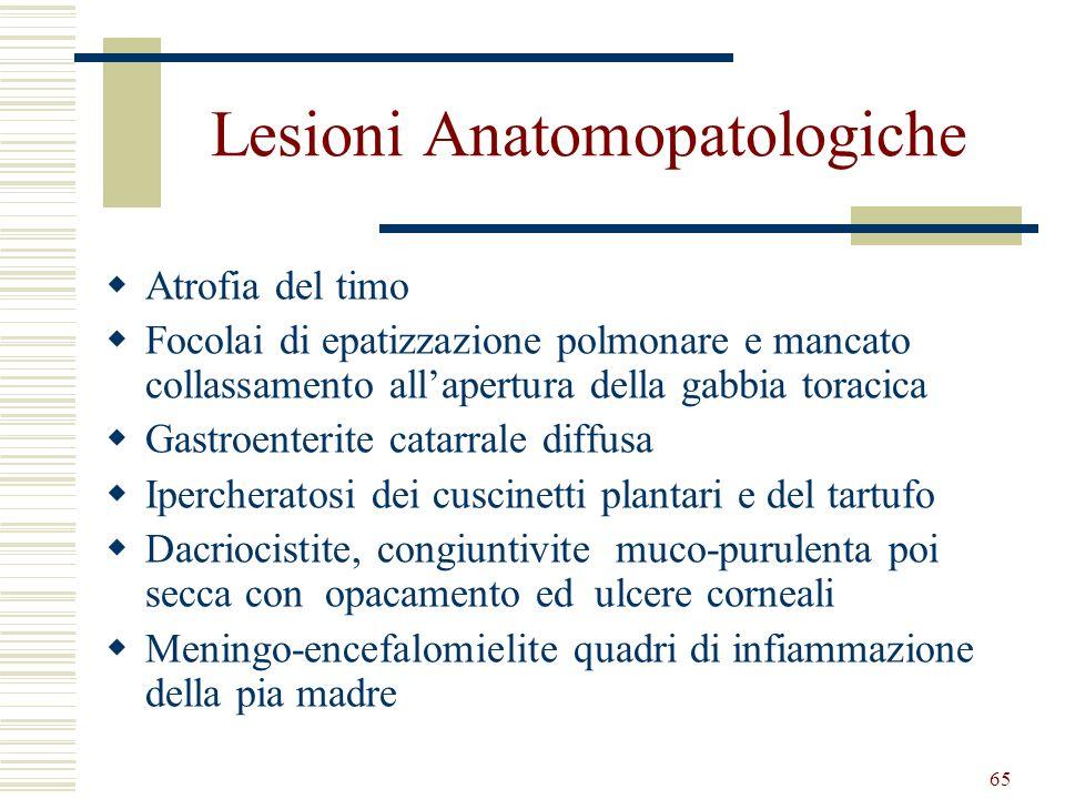 Lesioni Anatomopatologiche
