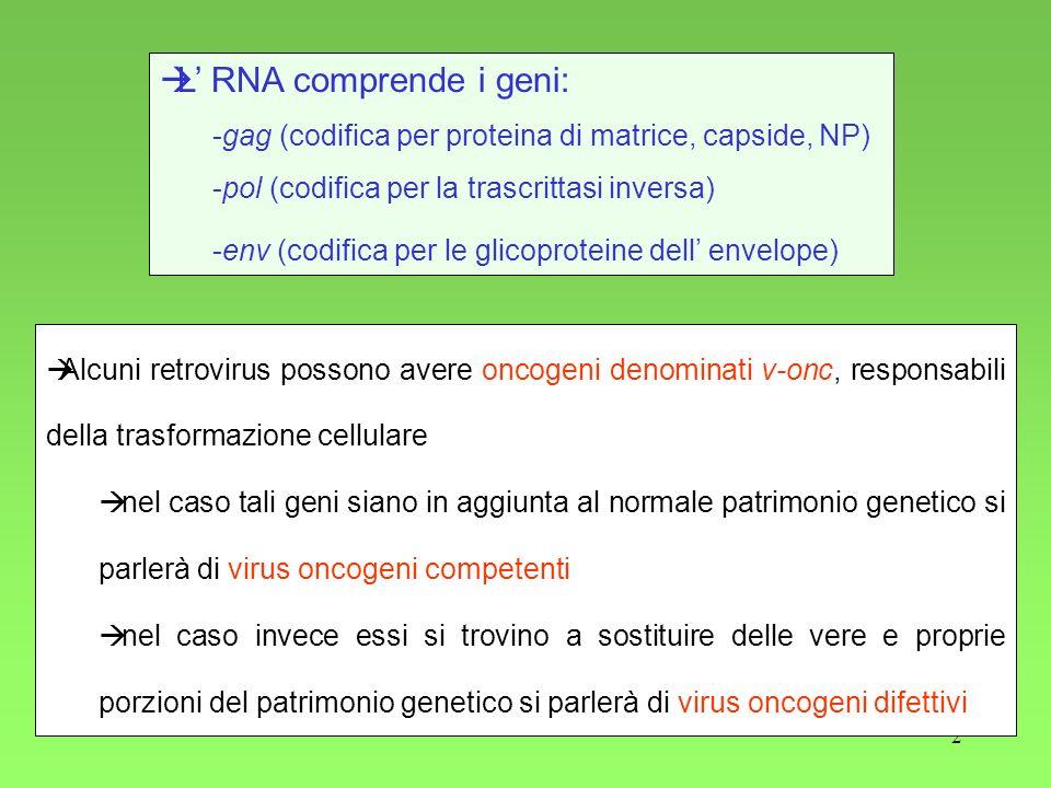 L' RNA comprende i geni:
