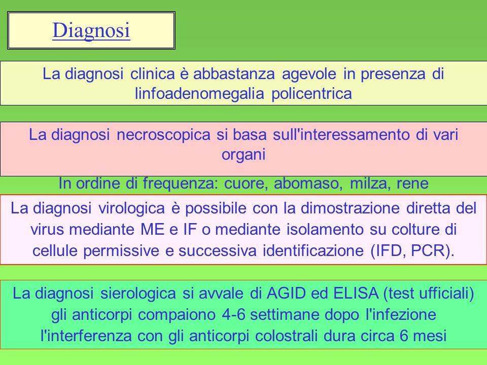 Diagnosi La diagnosi clinica è abbastanza agevole in presenza di linfoadenomegalia policentrica.