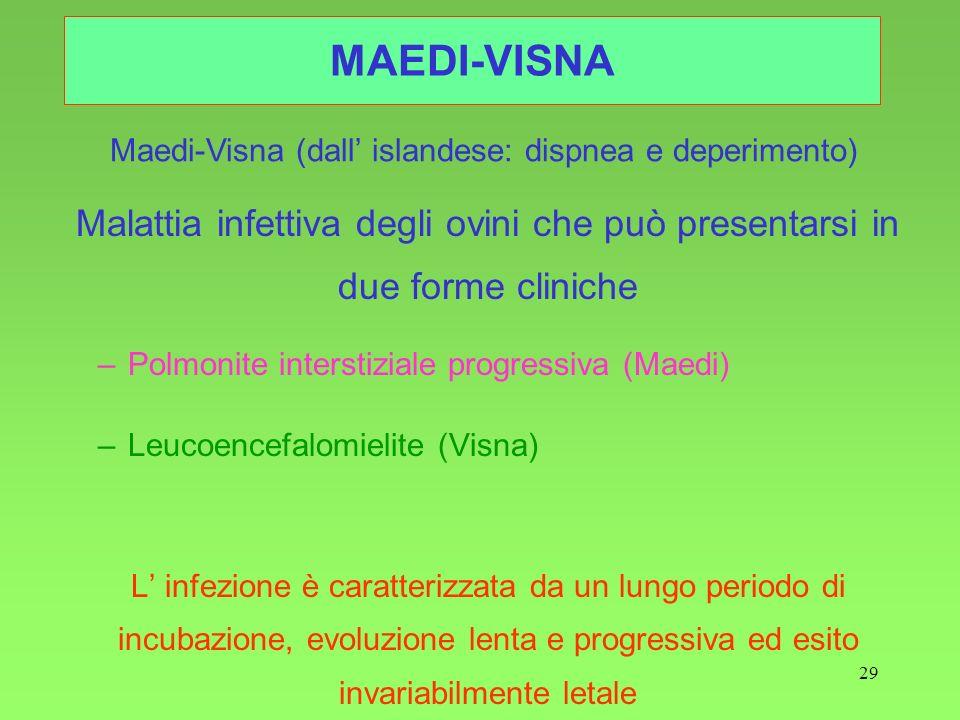 Maedi-Visna (dall' islandese: dispnea e deperimento)