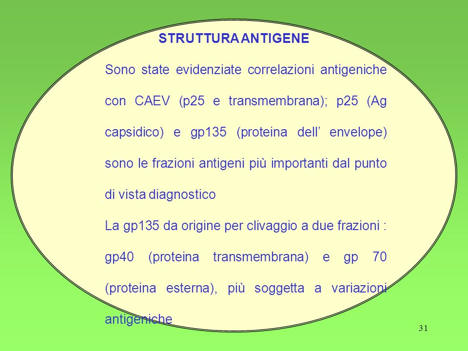 STRUTTURA ANTIGENE