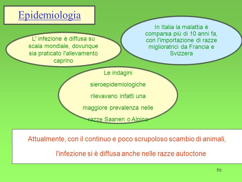 Epidemiologia In Italia la malattia è comparsa più di 10 anni fa, con l importazione di razze miglioratrici da Francia e Svizzera.