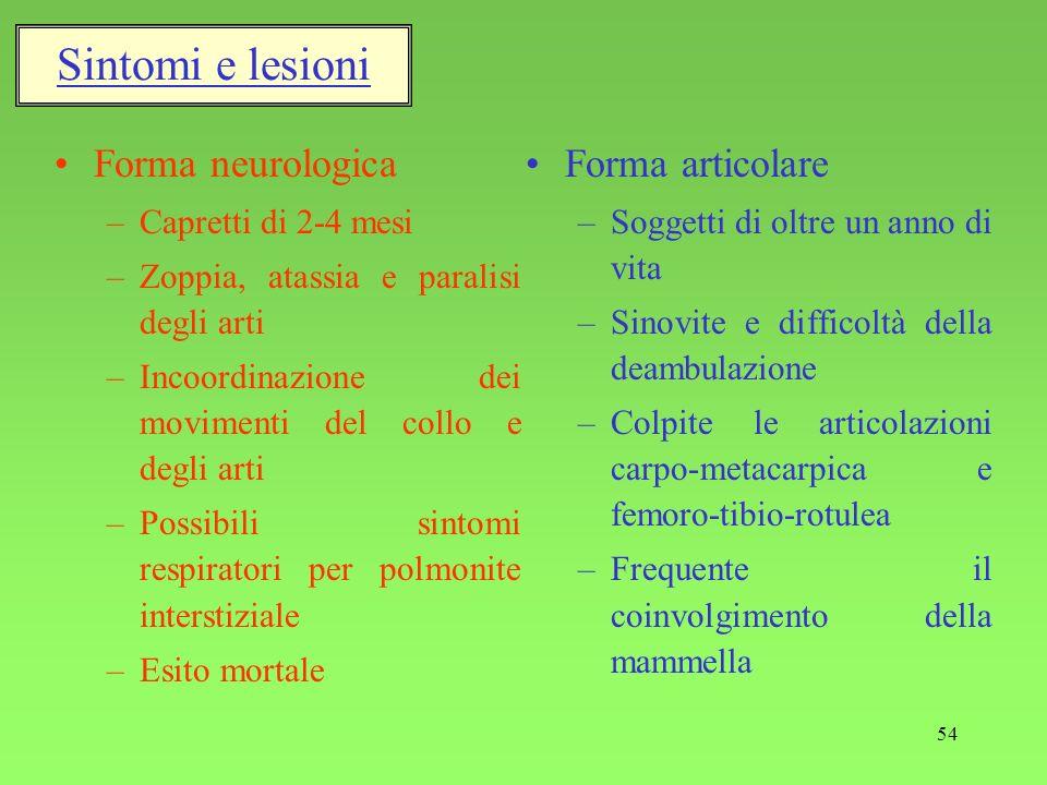 Sintomi e lesioni Forma neurologica Forma articolare
