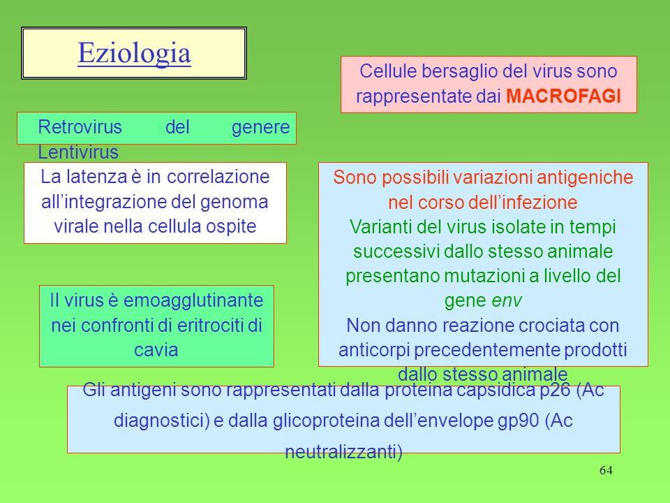 Eziologia Cellule bersaglio del virus sono rappresentate dai MACROFAGI