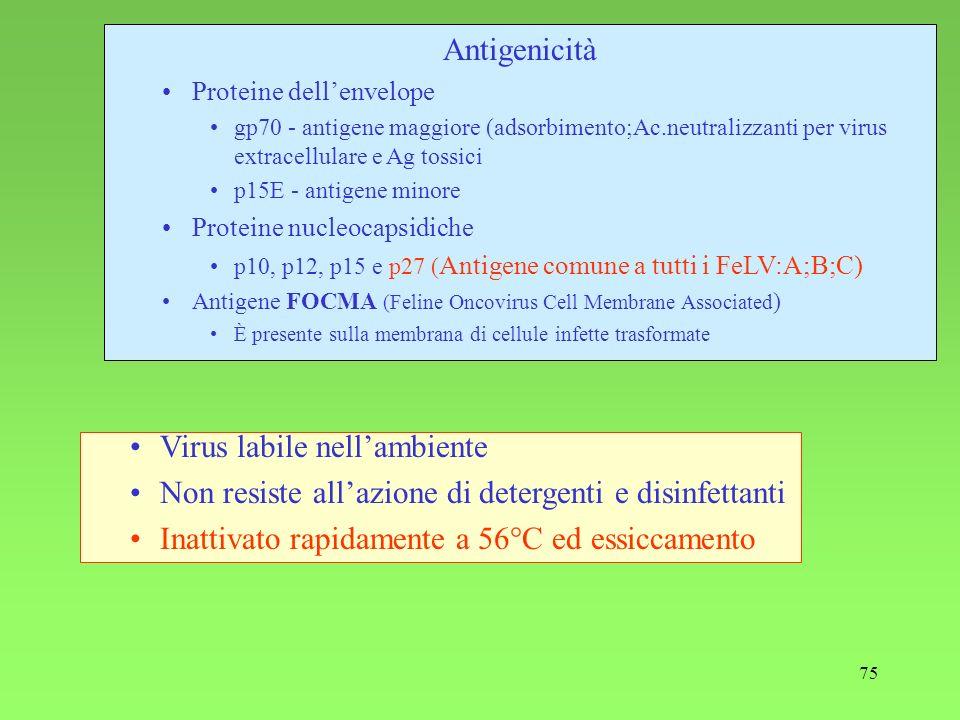 Virus labile nell'ambiente