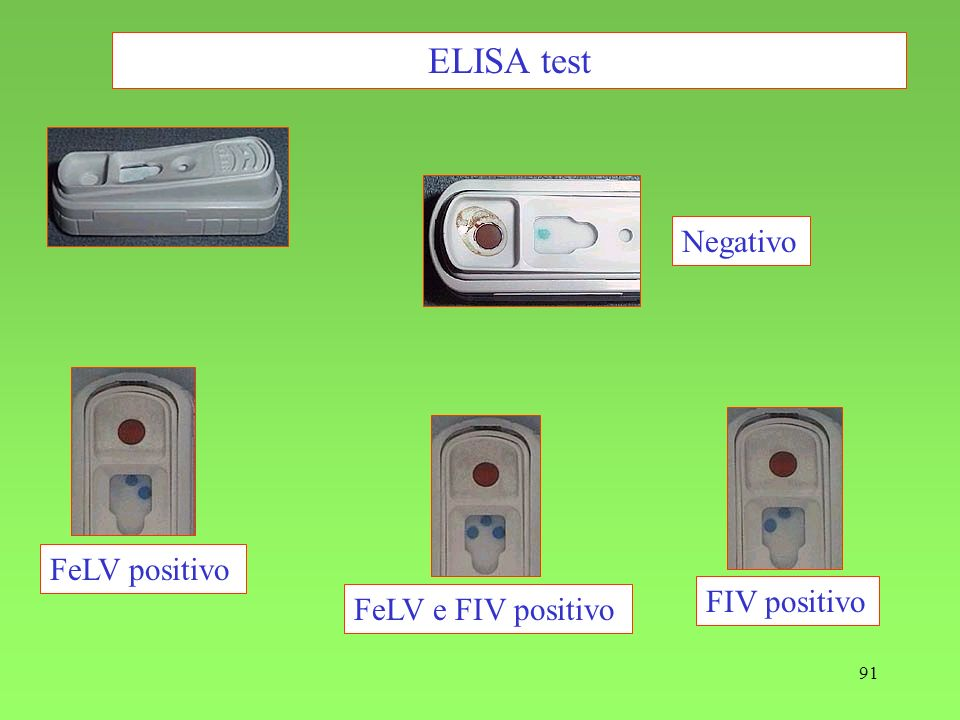 ELISA test Negativo FeLV positivo FIV positivo FeLV e FIV positivo