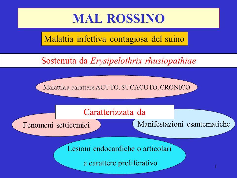 MAL ROSSINO Malattia infettiva contagiosa del suino