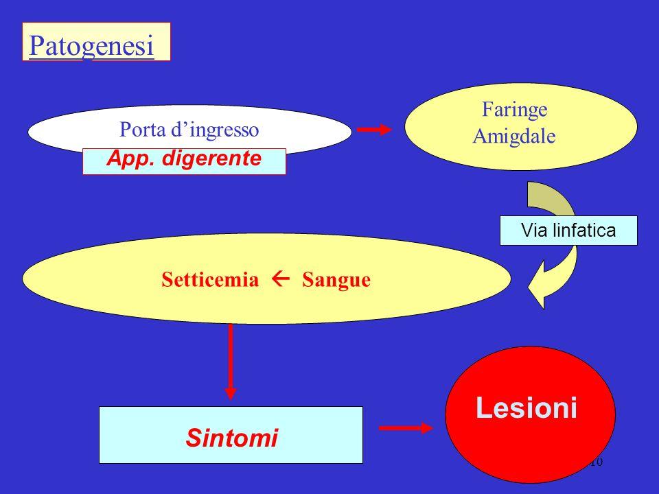 Patogenesi Lesioni Sintomi Faringe Amigdale Porta d'ingresso