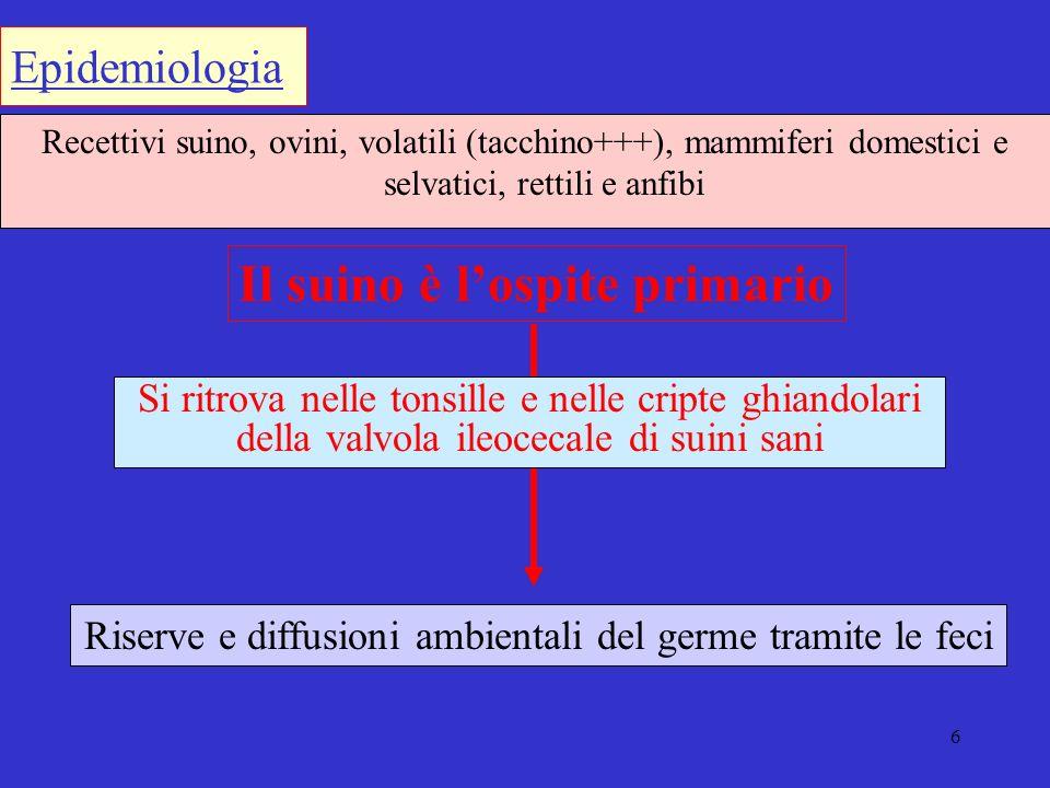 Riserve e diffusioni ambientali del germe tramite le feci