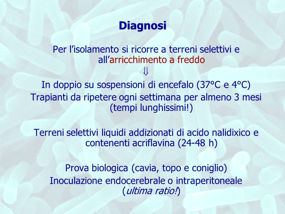 Diagnosi Per l'isolamento si ricorre a terreni selettivi e all'arricchimento a freddo.  In doppio su sospensioni di encefalo (37°C e 4°C)