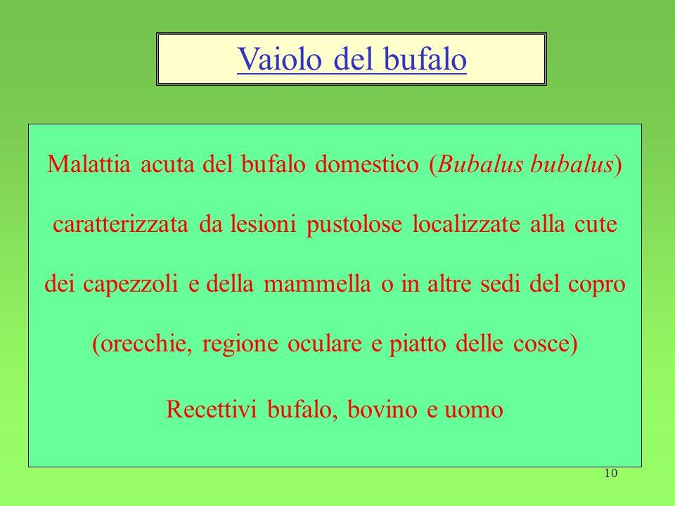 Recettivi bufalo, bovino e uomo