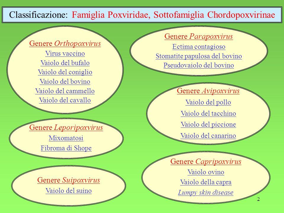 Classificazione: Famiglia Poxviridae, Sottofamiglia Chordopoxvirinae