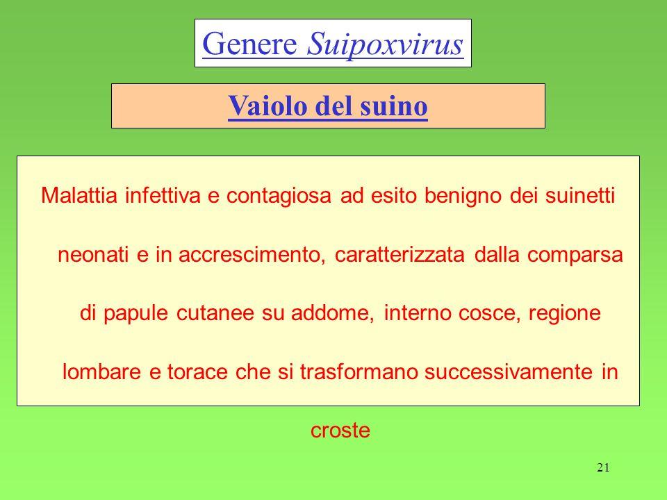 Genere Suipoxvirus Vaiolo del suino