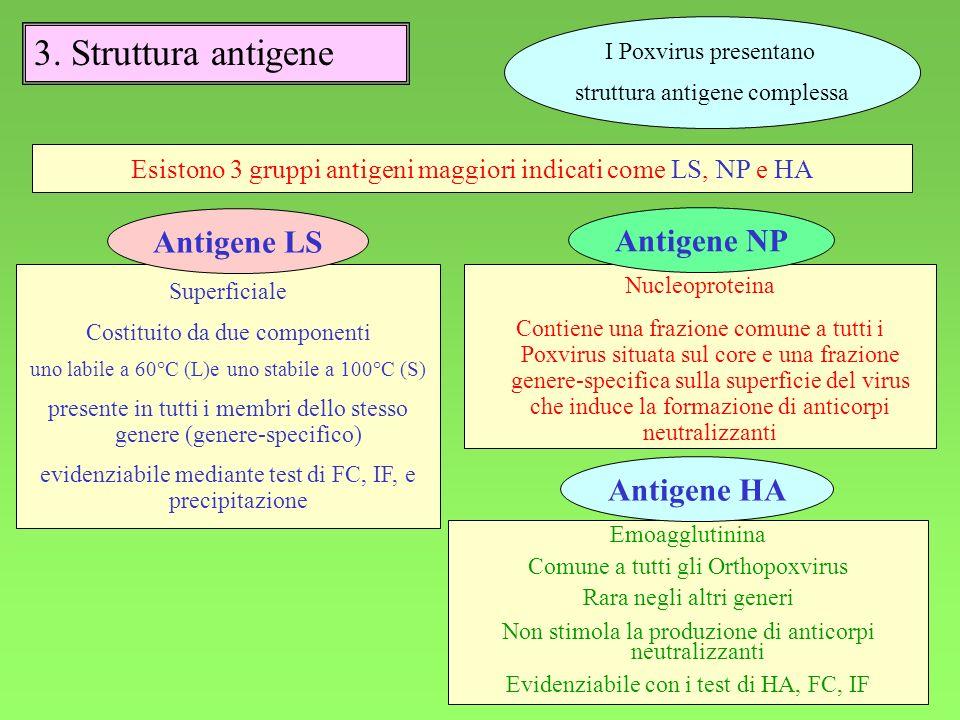 3. Struttura antigene Antigene LS Antigene NP Antigene HA