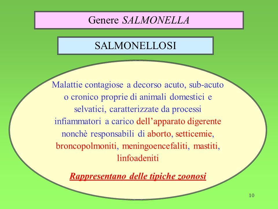 Rappresentano delle tipiche zoonosi