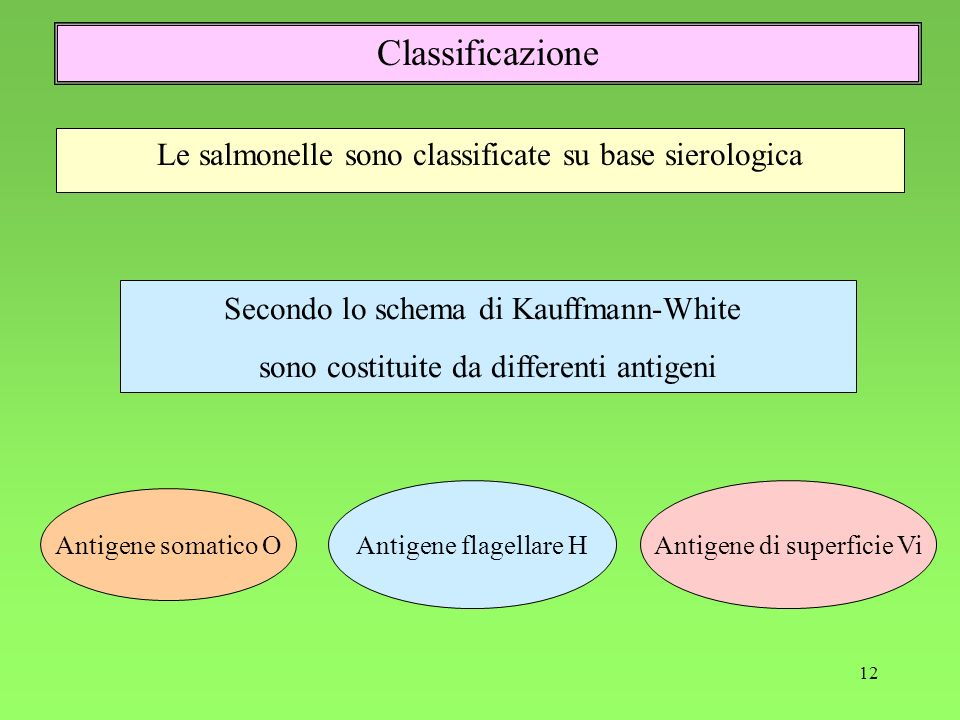 Classificazione Le salmonelle sono classificate su base sierologica