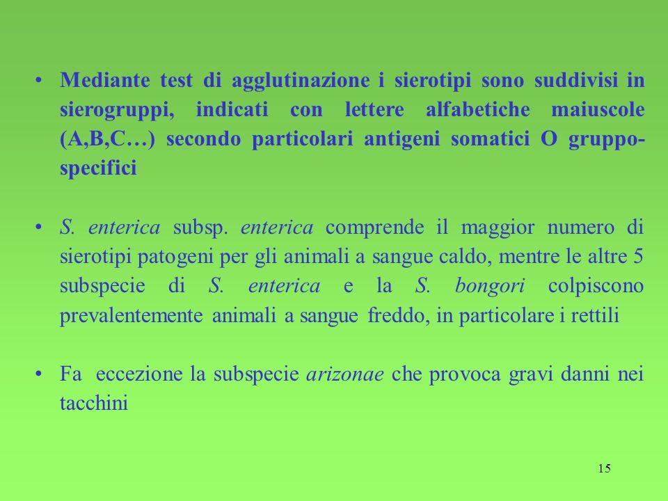 Mediante test di agglutinazione i sierotipi sono suddivisi in sierogruppi, indicati con lettere alfabetiche maiuscole (A,B,C…) secondo particolari antigeni somatici O gruppo-specifici