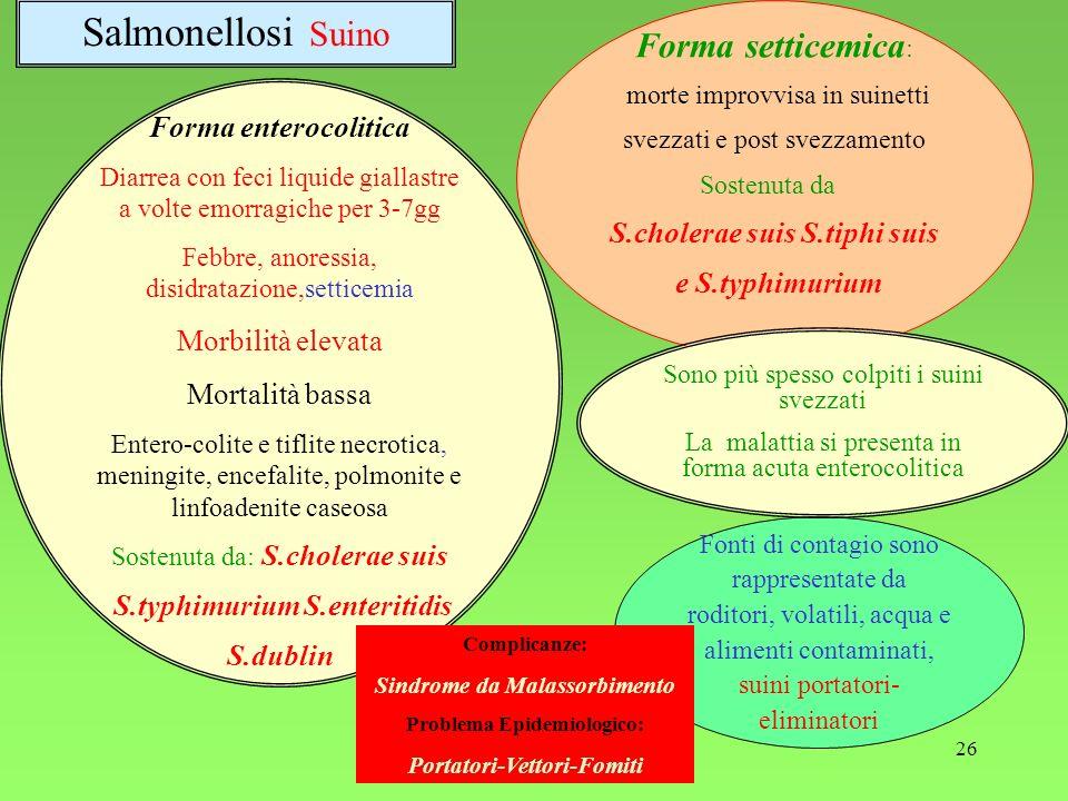 Salmonellosi Suino Forma setticemica: Forma enterocolitica