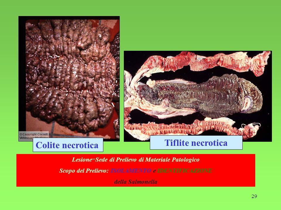 Tiflite necrotica Colite necrotica