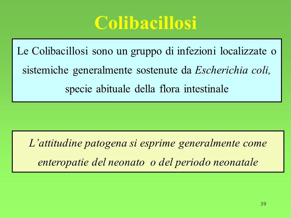 Colibacillosi