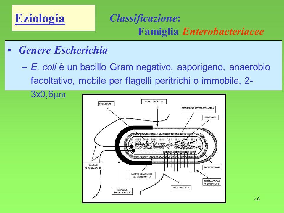 Eziologia Classificazione: Famiglia Enterobacteriacee