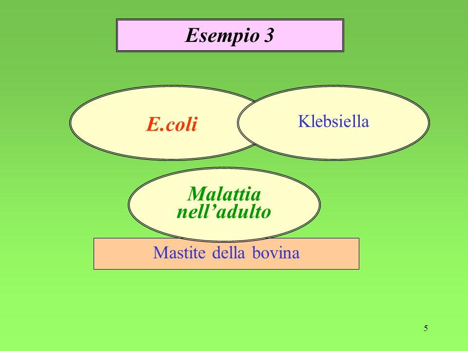 Esempio 3 E.coli Malattia nell'adulto