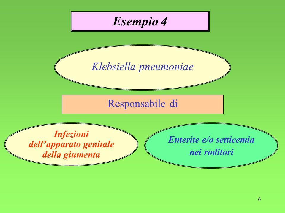 Esempio 4 Klebsiella pneumoniae Responsabile di